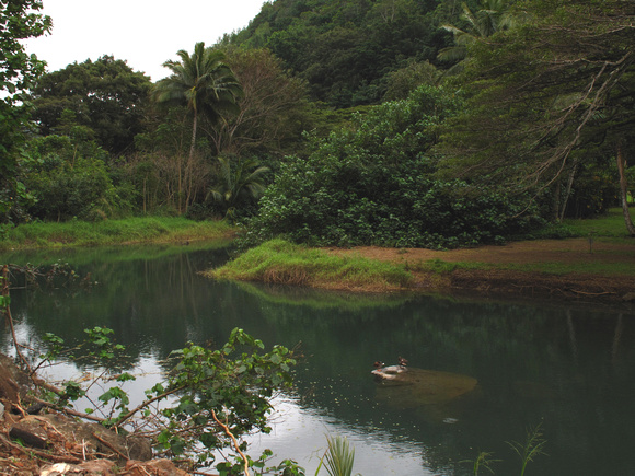 Waimea Valley, Oahu, City & County of Honolulu, Hawaii, photo by Patrick (Pat) Michael McNally