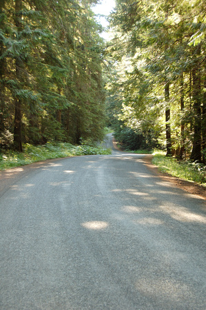 Port Angeles Forest Road, Washington State, photo by Patrick (Pat) Michael McNally