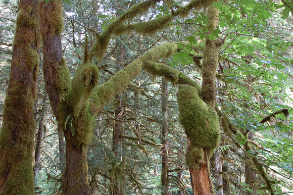 Nooksack River Trees, Washington State, photo by Patrick (Pat) Michael McNally